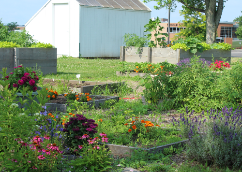 Flowers and vegetables growing in the Garden of the Saints.